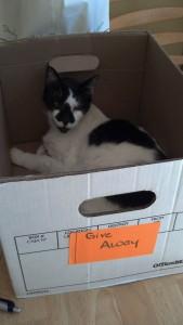 Zorro in the give away box