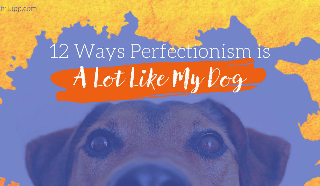 12 Ways Perfectionism is a Lot Like My Dog