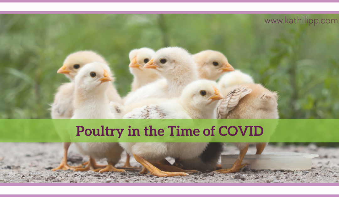 Poultry In The Time of COVID